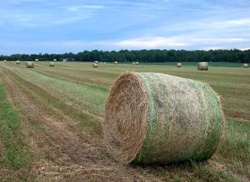 Round bales of first-cutting alfalfa hay rest in the field before being hauled into storage. Photo credit: James DeDecker, MSU Extension