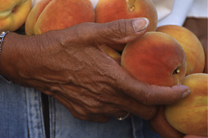 Webinar - Building food council networks that support health, local economies and equity