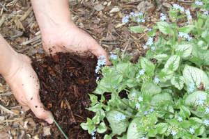 Smart gardeners improve their soil and weed control with organic mulch