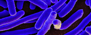 A picture of E. coli
