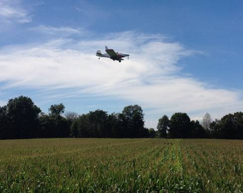 Aerial seeding cover crops into standing corn has been done successfully in research trials and on farms. Photo: Dean Baas.