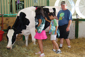 Attend the Great Dairy Adventure to learn how milk goes from moo to you! Photo credit: ANR Communications | MSU Extension