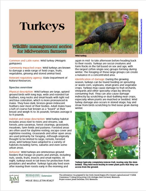 Photo of first page of Turkeys article.