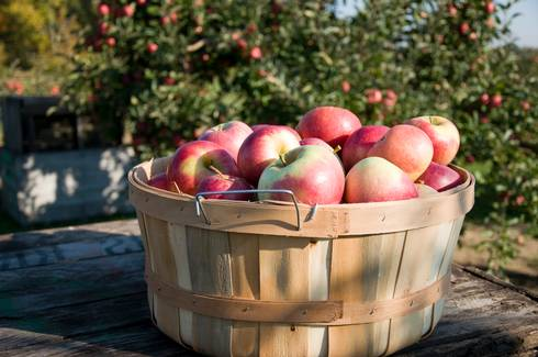 Apples in a basket. Photo courtesy of Michigan Apple Committee.