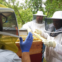 Heroes to Hives trains veterans on best practices for honeybee health and minimizing loss to sustain bees.