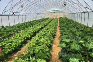 East Michigan vegetable update – June 3, 2020