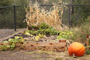 Preparing your garden this fall for next year's bounty