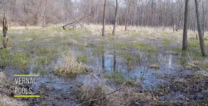 BeLEAF It or Not! 2: Exploring Vernal Pools