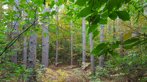 MSU to hosts Sustainable Forest Harvesting Virtual Field Day