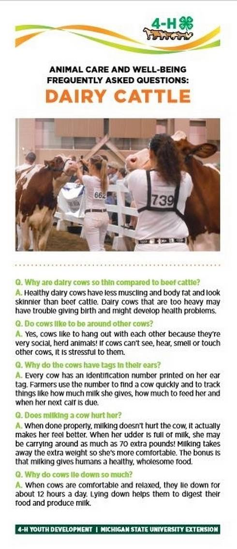 Dairy cattle bookmark.