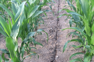 Small amount of irrigation can reduce nitrogen loss due to volatilization.