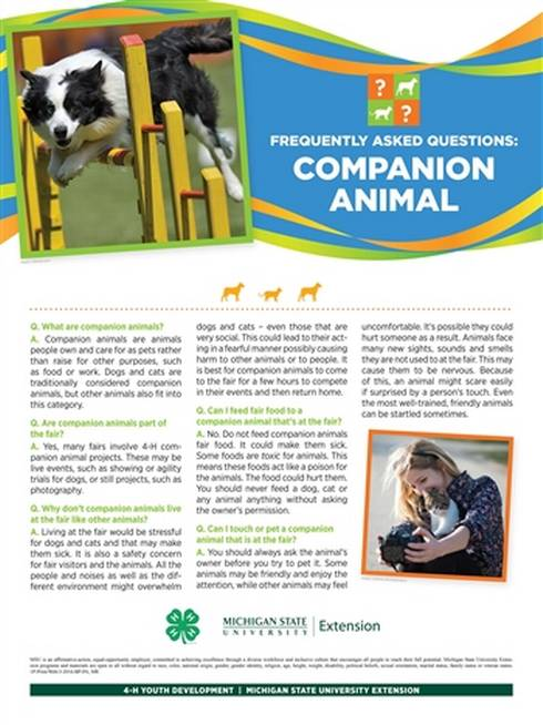Companion animal poster with information and photo of dog.