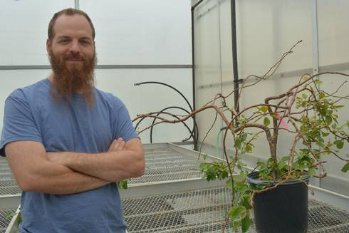 MSU researcher Joseph Hill pictured in a campus greenhouse.
