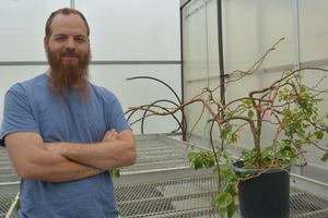 Horticulture postdoc researcher awarded USDA fellowship to study tree architecture