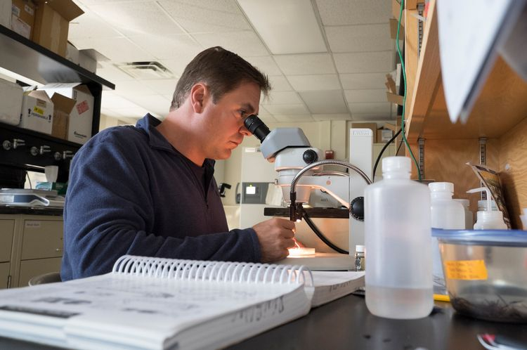 Forensic Entomologist Is Helping Tv Crime Investigators Solve A Cold Case Department Of Entomology