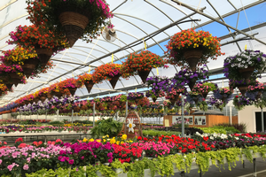 Garden center retail survival strategy series: Marketing and merchandizing