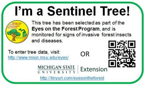 Sentinel tree tag for identification of a tree entered into the Eyes on the Forest program. | Photo by Michigan State University Extension