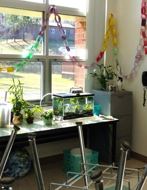 Aquariums are great learning tools in the classroom and should never be released into the wild.