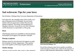 Sod webworm: Tips for your lawn