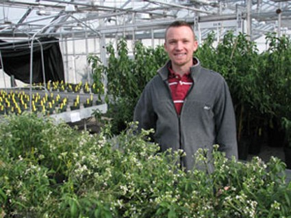 MSU research assistant Nate Durussel with stevia plants