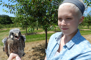 MSU integrative biology graduate student Megan Shave with a nestling American kestrel banded in Leelanau County