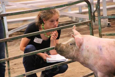 Youth apply animal anatomy and physiology skills through animal evaluation.
