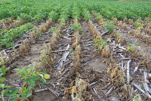 Reducing soybean production costs in 2020