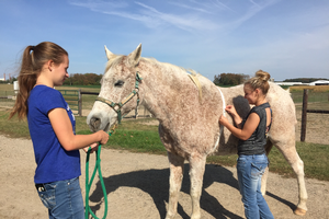 Michigan State University Ag Tech Horse Management students use a weight tape to monitor a horse's health.