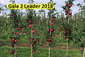 Multileader apple production systems: Pros and cons for Michigan's apple industry