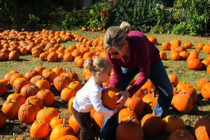 Try visiting a pumpkin patch this fall. Photo by clarkmaxwell, Flickr Creative Commons