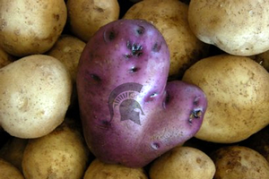 Michigan-shaped potato. Photo illustration courtesy of MSU.