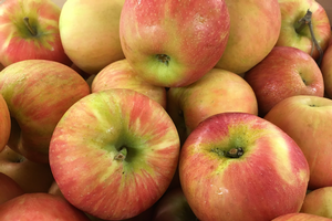 East Michigan apple maturity report – Sept. 23, 2020