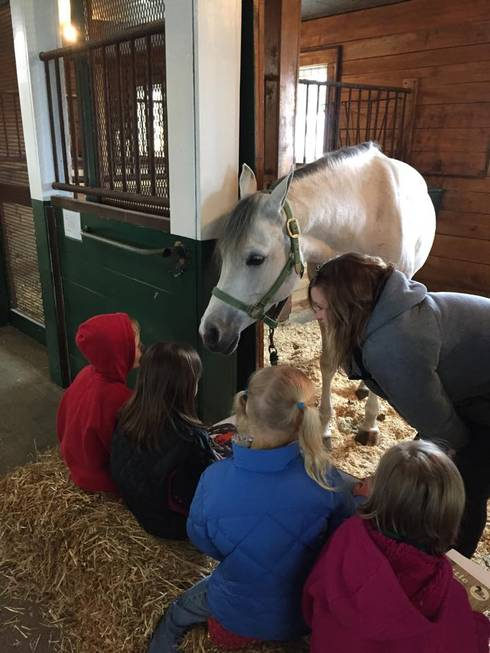 Students read to horses at MSU's Horse Teaching and Research Center