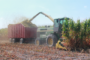 Corn silage quality can vary with disease incidence
