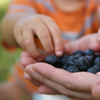 Child picks blueberries from a parent's hand.