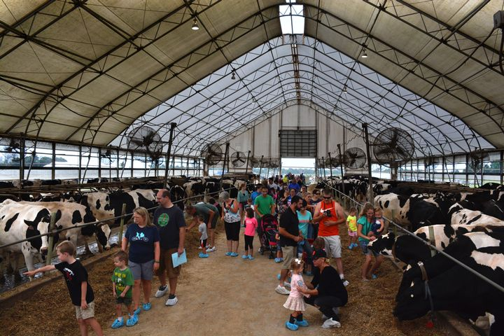 Freestall barn with visitors. 2015 Hood Family Dairy event.