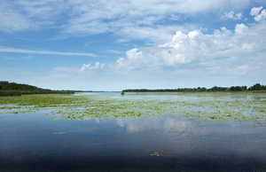 When the first Europeans arrived, Michigan boasted 10.7 million acres of wetlands covering more than 17 percent of the state's total land area. Photo: Michigan Sea Grant
