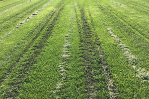 Wet spring conditions create challenging turfgrass conditions