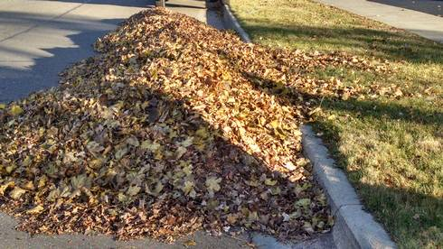 Save time and hassle of raking leaves by simply mulching them into your lawn, improving your lawn's growth and health. Photo: Rebecca Krans, MSU Extension.
