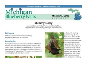 Michigan Blueberry Facts: Mummy Berry (E2846)