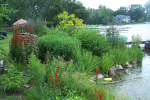 Understanding lakeshore ecosystems — Part 3: Natural vegetation