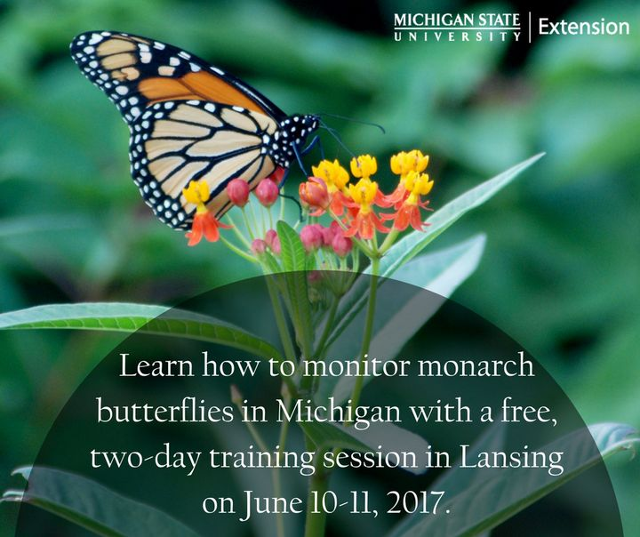 Learn how to monitor monarch butterflies in Michigan with a free, two-day training session in Lansing on June 10-11, 2017.