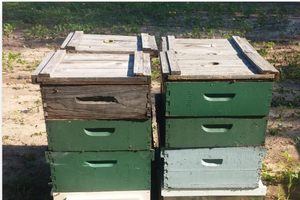 Starting and Keeping Bees in Michigan: Rules and Regulations