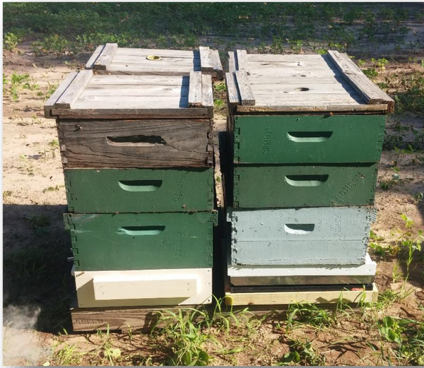 Starting And Keeping Bees In Michigan Rules And Regulations Msu