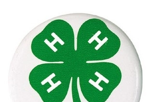 4-H Alumni Button