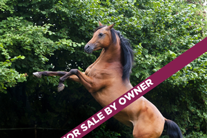 Defining horse jargon: Horse sale terms