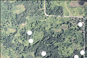Identification of potential oak wilt sites using aerial photography.