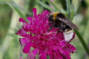 Second national conference on protecting pollinators in urban landscapes