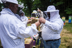 Saving veterans and bees with Heroes to Hives program