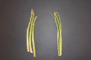 Spring's first vegetable, asparagus